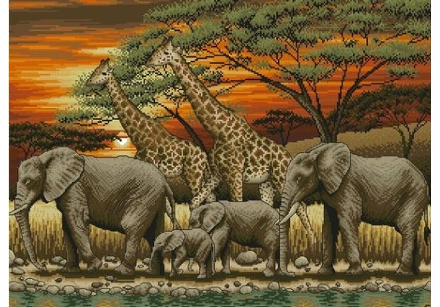 Африкански залез